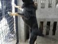 Pies do adopcji 11
